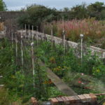 flower and vegetable beds in Edinburgh's walled garden