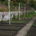 rows of newly planted vegetable beds
