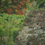Autumn leaves turn colours behind 16th century remains of walled garden in Edinburgh