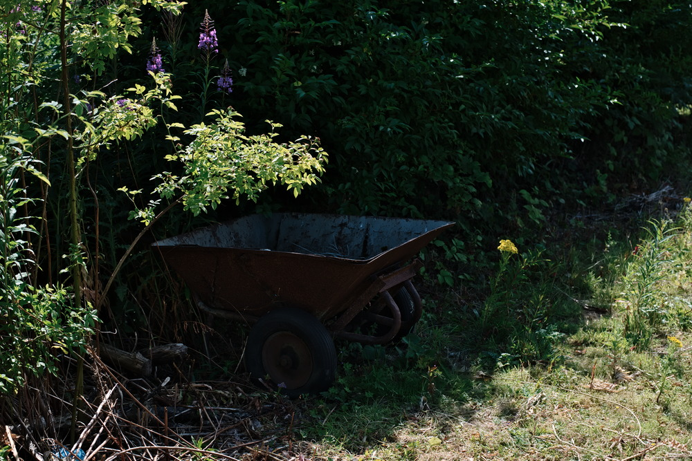 rusty wheelbarrow in shade