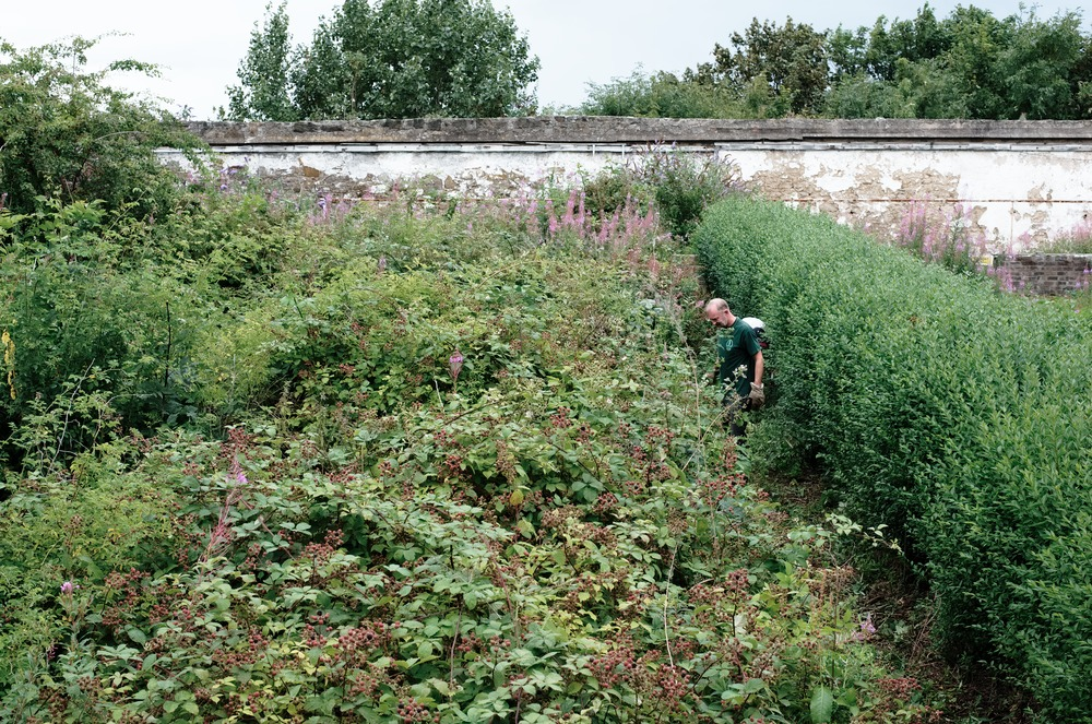 two men trimming between two tall hedges