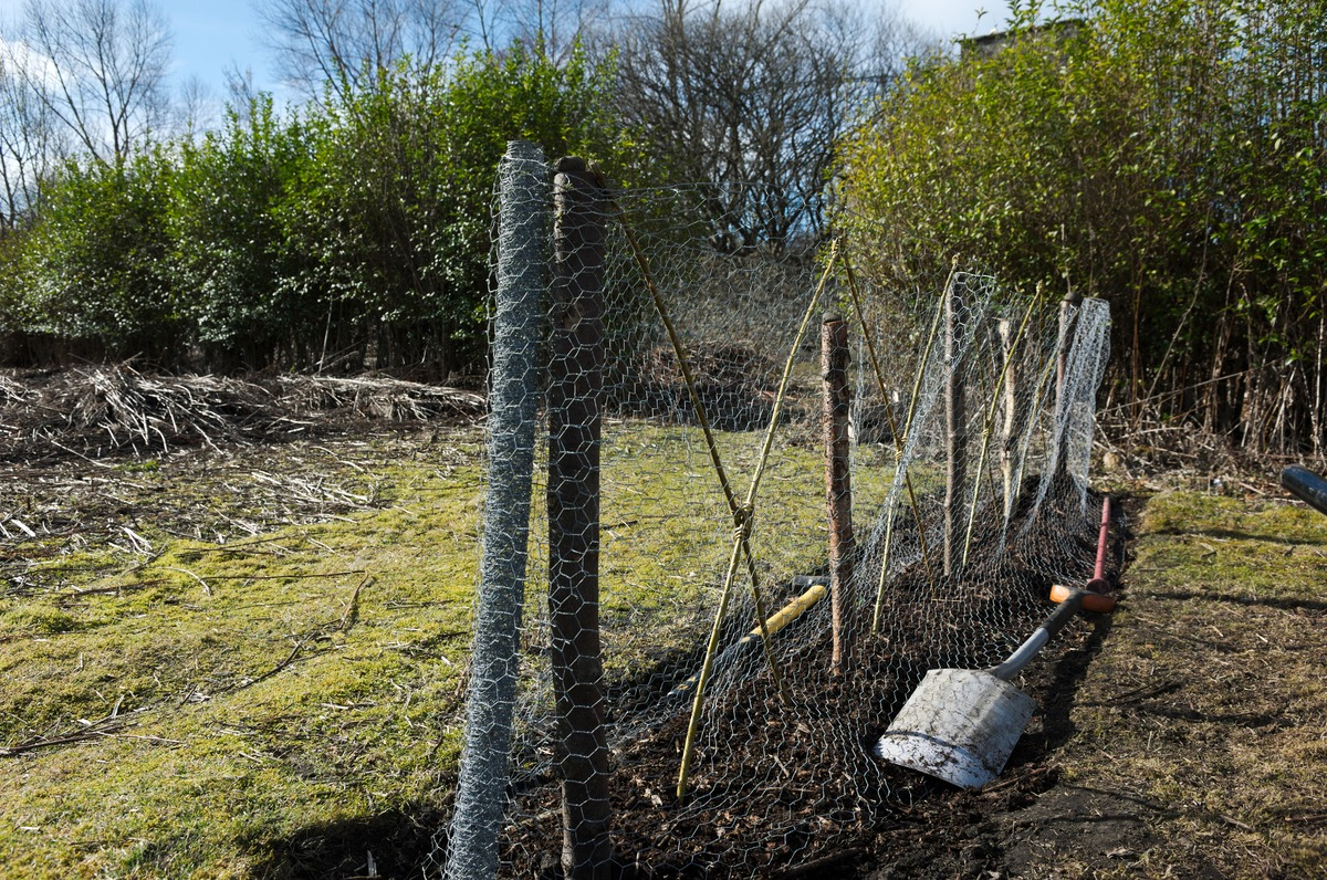 shovel and gardening tools lie alongside chickenwire fencing