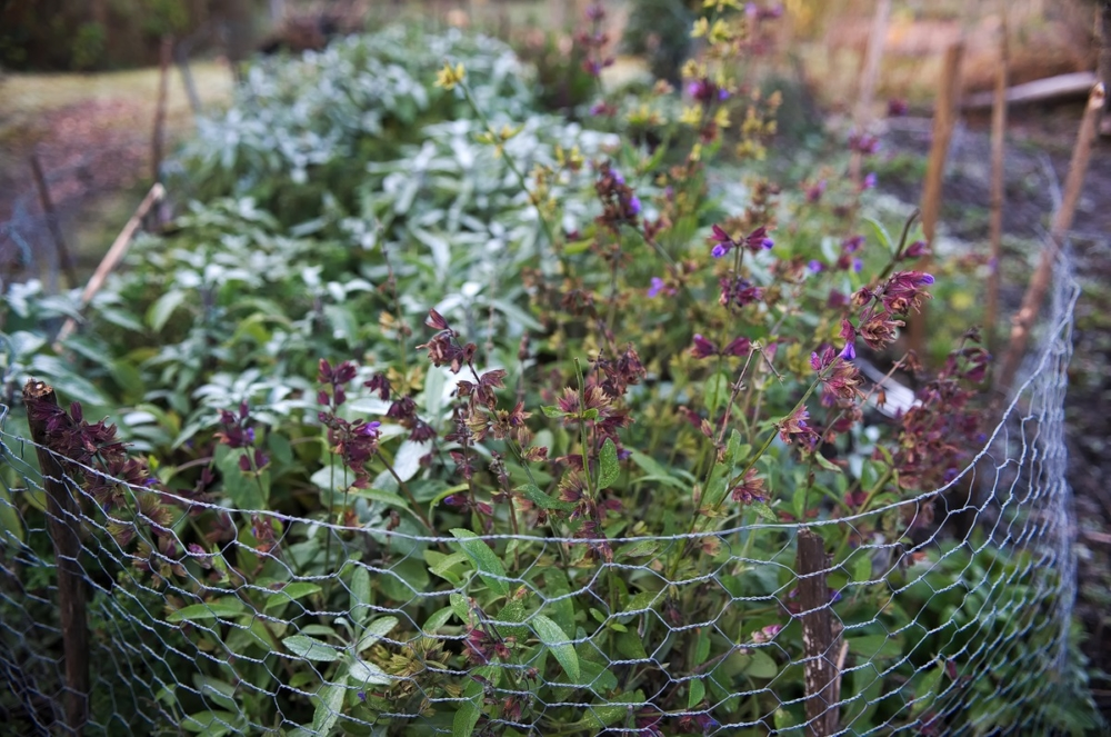 winter herbs community garden Edinburgh
